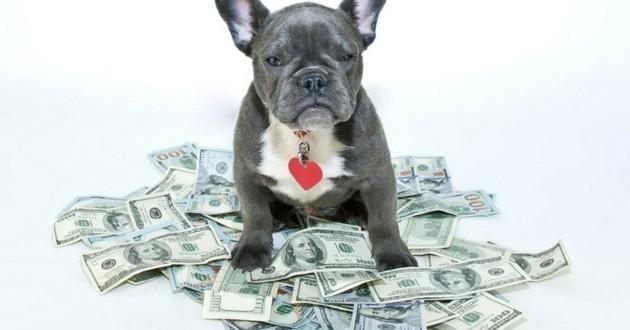 Combien coûte un chien ?